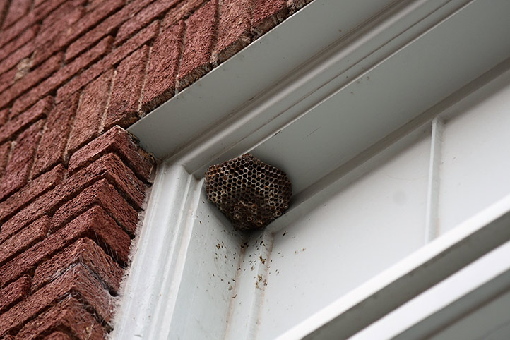 We provide a wasp nest removal service for domestic and commercial properties in Great Dunmow.